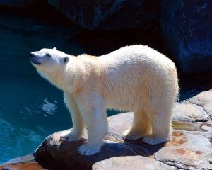 bear-1102605_1280